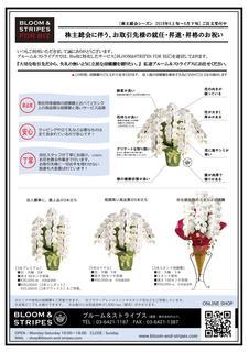 株主総会向け胡蝶蘭ご紹介.jpg