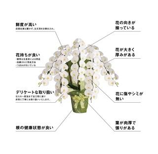 胡蝶蘭(コメント入).jpg