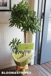 観葉植物 (1).jpg