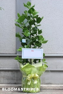 観葉植物 (2).jpg