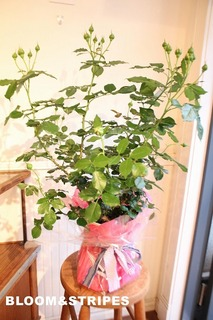観葉植物 (3).jpg