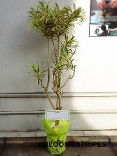 観葉植物 (4).jpg