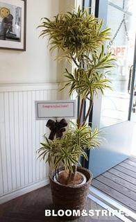 観葉植物 (5).jpg