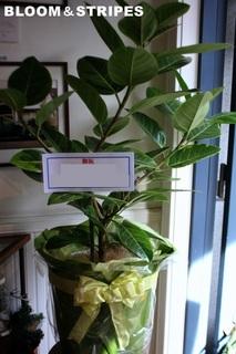 観葉植物 (6).jpg