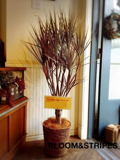 観葉植物 (7).jpg
