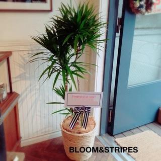観葉植物 (8).jpg