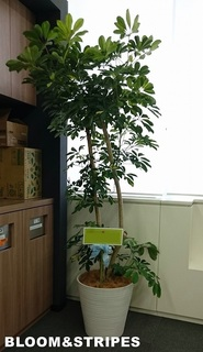 観葉植物7 (1).jpg