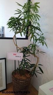 観葉植物7 (2).jpg