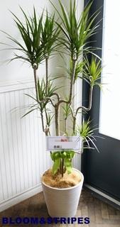 観葉植物7 (3).jpg