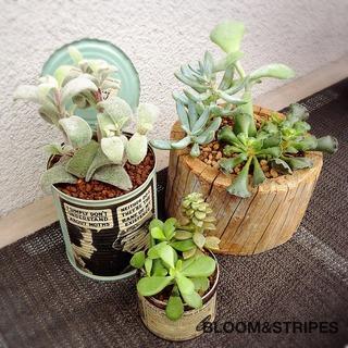 観葉植物 .jpg