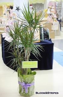 観葉植物4.jpg
